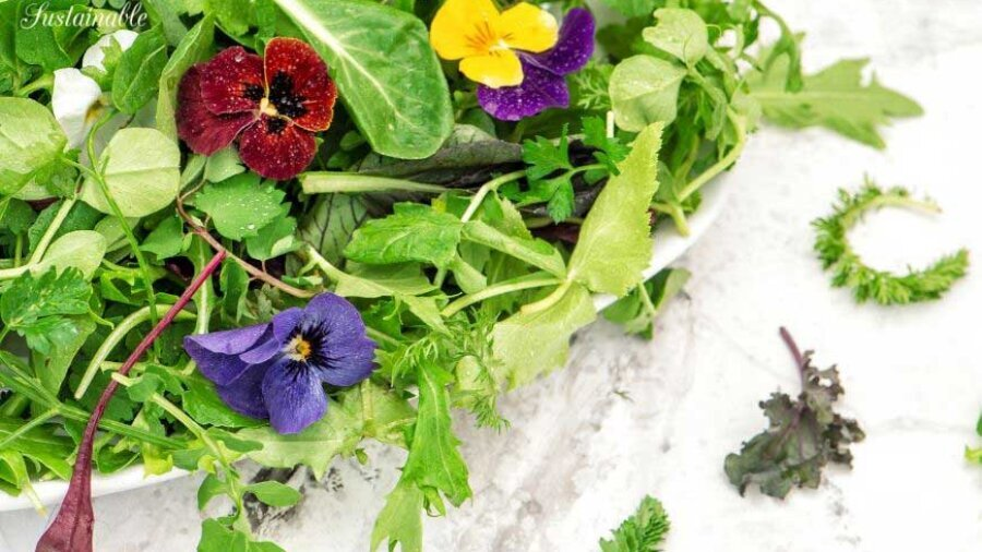 salad in a white bowl with edible flowers
