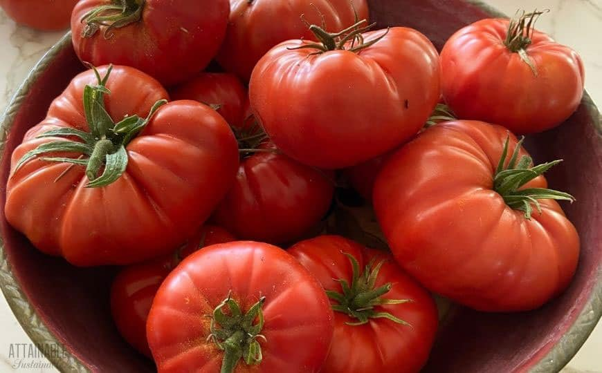 beautiful tomatoes in a wooden bowl