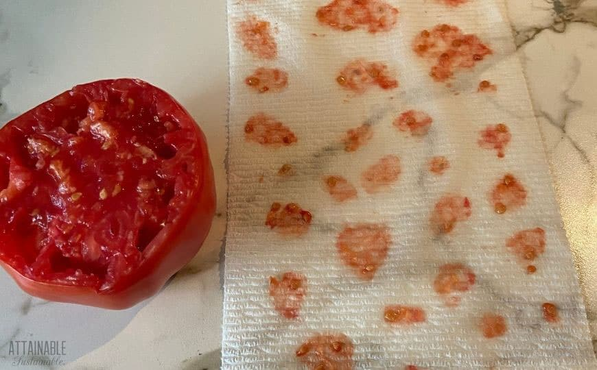 saving tomato seeds on a paper towel; ripe tomato cut in half at left.