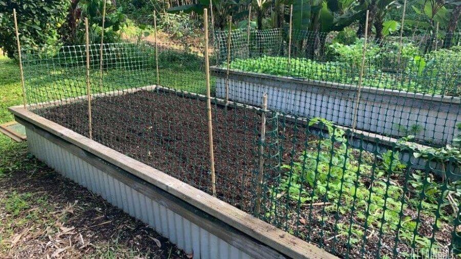 raised garden beds with cat deterrent fences