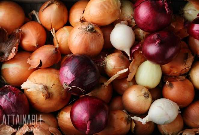 Group of multicolored onions