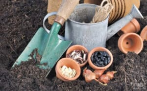 clay pots with seeds in them, alongside green trowel and watering can