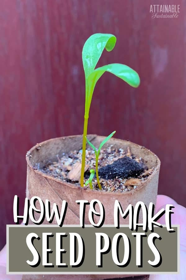 beet seedling in an upcycled seed starter pot