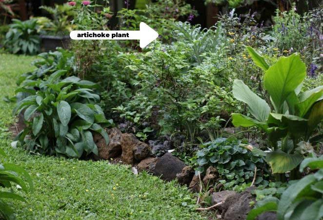 landscape with various plants