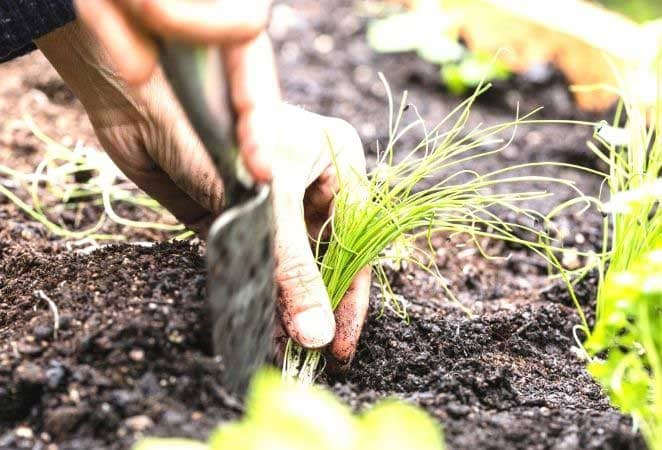 hand and a trowel transplanting a garden plant