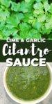 cilantro, top; green sauce, bottom