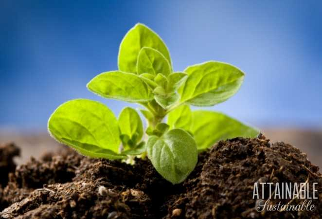 Organo plant and soil