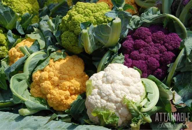 Multicolored heads of Cauliflower