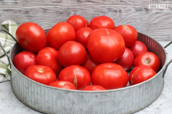 lots of tomatoes in a galvanized tray